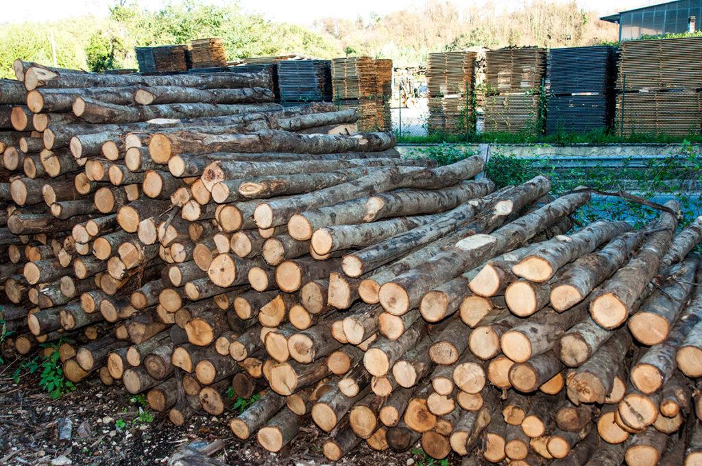 pali in legno di castagno