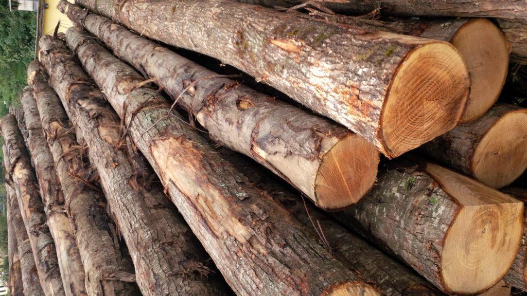 tronchi in legno di castagno